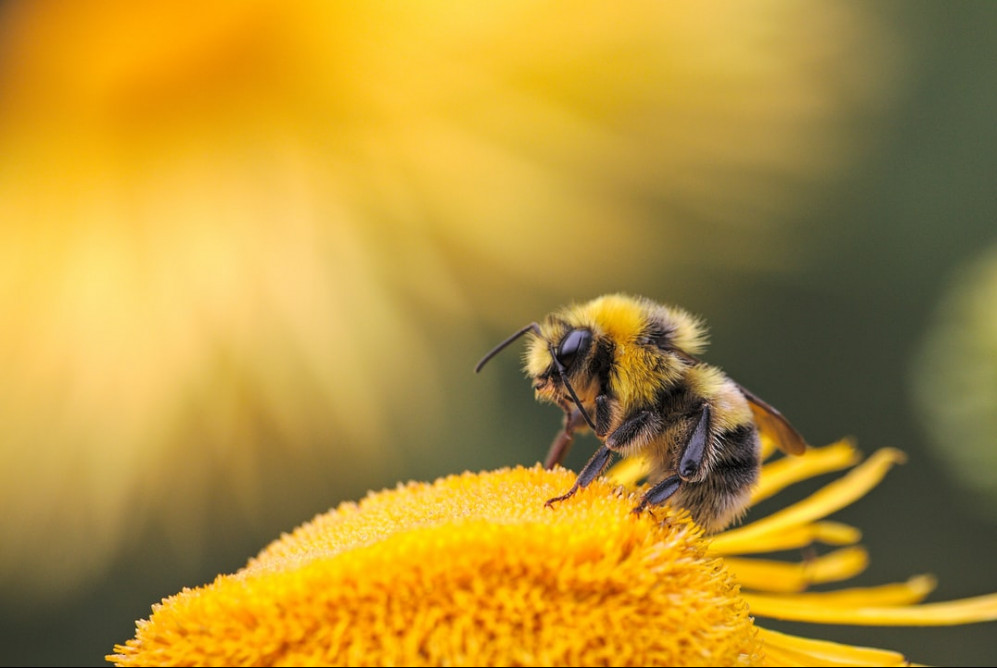 everything you need to know about bee venom for anti aging