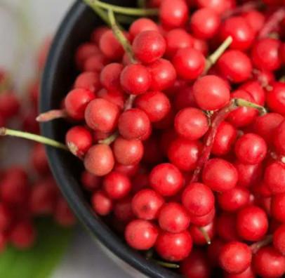 what is schizandra berry amazing anti aging herb